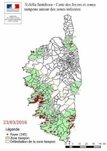 Xylella fastidiosa subsp. multiplex in Corsica 23/03/2016